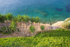 Sea with transparent water and palm trees Stock Photos
