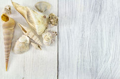 Sea travel frame with seashells over wooden background Stock Photos