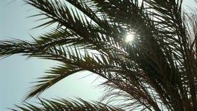 Sea travel resort. The bright sun shines, blinks stock video