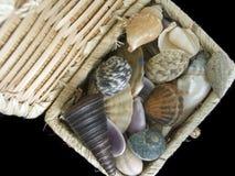 Sea treasure. Straw casket with seashells Stock Image