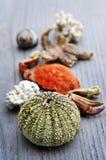 Sea treasures Stock Photo