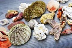 Sea treasures Royalty Free Stock Image