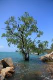 Sea and tree Stock Image