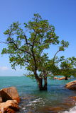 Sea and tree Stock Photography