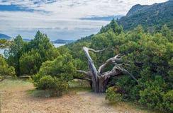 Sea and tree Royalty Free Stock Photos
