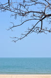 Sea with tree branch, ocean background Royalty Free Stock Photo