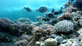 Sea,  Tropical fish. stock footage