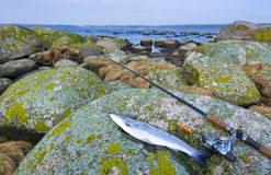 Sea trout fishing composition Royalty Free Stock Image