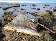 Sea trout fishing trophy Royalty Free Stock Photo