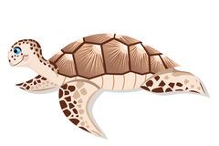 Sea turtle. Brown - color illustration Royalty Free Stock Photos