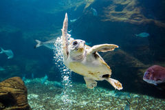 The sea turtle Stock Images