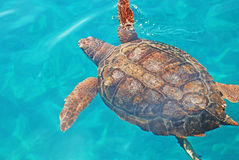 Sea turtle. Greece sea turtle at zakynthos island Royalty Free Stock Images