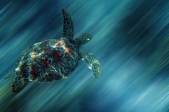 Sea turtle. Turtle in China sea around Apo Island - Philippines - With a clipping path Royalty Free Stock Photo