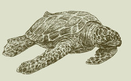 Sea turtle Royalty Free Stock Images