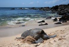 Free Sea Turtle Stock Photos - 5282163