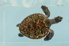 Sea turtle. In animal hospital Stock Photo