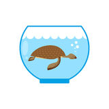 Sea turtle in an aquarium. Water animal Pet in captivity. Stock Photos