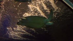 Sea turtle in beautifully decorated Marine. Sea turtle in the beautifully decorated Marine Aquarium stock video footage