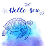 Sea turtle on a blue background Stock Image