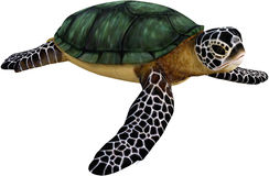 Sea Turtle Cartoon Illustration Isolated Royalty Free Stock Image