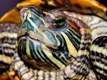 Sea turtle close-up Royalty Free Stock Photos