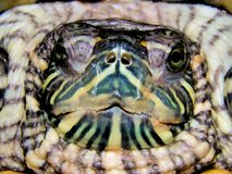 Sea turtle close-up Stock Images