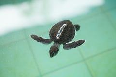Sea turtle Conservation of marine species Stock Image