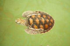 Sea turtle Conservation of marine species Stock Photos
