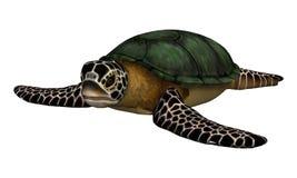 Sea Turtle Royalty Free Stock Photo