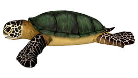 Sea Turtle. 3D digital render of a swimming sea turtle isolated on white background Stock Photos
