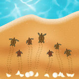 Sea turtle eggs on the beach Stock Photography