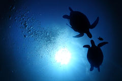 Sea turtle family Royalty Free Stock Images
