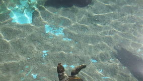 Sea turtle with fishes. Swimming in aquarium. Underwater Observatory Marine Park. Eilat, Israel stock footage