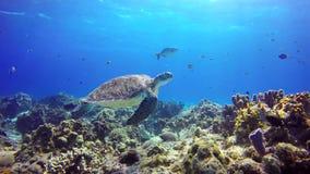 A sea turtle floats close to reef bottom.