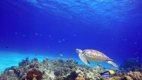 A sea turtle floats close to reef bottom.