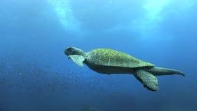 Sea turtle flying in the ocean