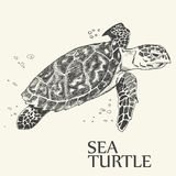 Sea turtle. Hand drawn vector illustration. Turtle isolated on white background stock illustration