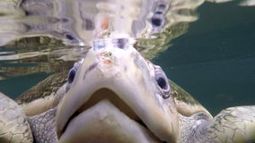 Sea turtle head look in camera. Close up underwater shot of a sea turtle head stock video