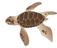 Sea Turtle, illustration Royalty Free Stock Photography