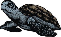 Sea turtle isolated Stock Photos