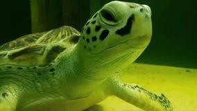 Sea turtle in Marine Aquarium. Sea turtle in beautifully decorated Marine Aquarium stock footage