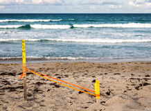 Sea Turtle Nest Royalty Free Stock Photo