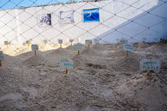 Sea Turtle Nests at Farm Stock Photography