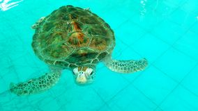 Sea turtle nursery Royalty Free Stock Image