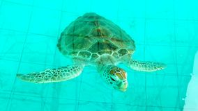Sea turtle nursery Stock Images
