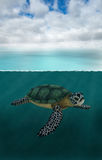 Sea Turtle, Ocean, Nature, Wildlife Stock Photo