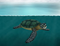 Sea Turtle, Ocean, Nature, Wildlife Stock Image