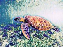 Sea turtle in open sea water digital illustration. Vivid underwater landscape of tropical lagoon. Royalty Free Stock Photos
