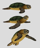 Sea turtle package Stock Photography