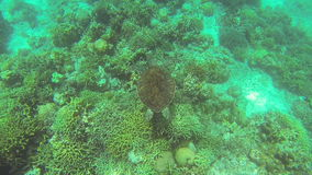 Sea turtle in Philippine Sea stock video footage